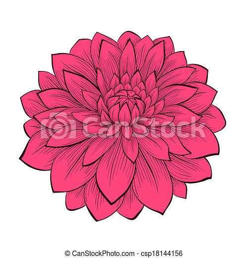 gyönyörű, grafikus, virág, mód, elszigetelt, megvonalaz, körvonal, háttér, dália, húzott, fehér - csp18144156