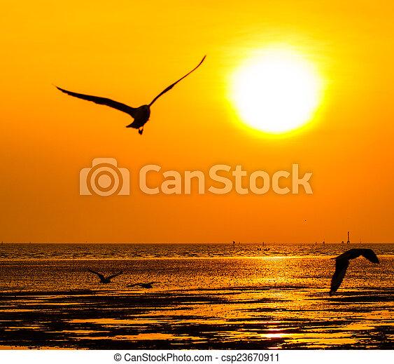 gyönyörű, napnyugta, felül, tenger - csp23670911