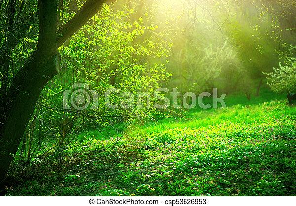 gyönyörű, természet, eredet, liget, zöld, fa., fű, táj - csp53626953