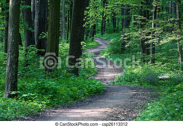 gyönyörű, zöld erdő - csp26113312