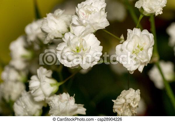 Gypsophila flowers small white flowers gypsophila babys breath gypsophila flowers csp28904226 mightylinksfo