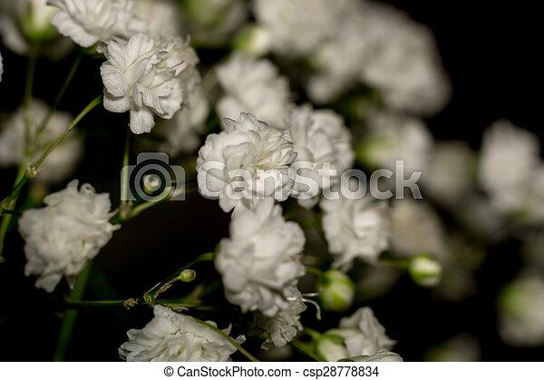 Gypsophila flowers small white flowers gypsophila babys breath gypsophila flowers csp28778834 mightylinksfo