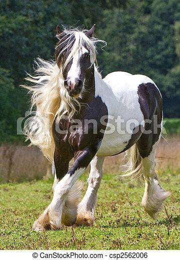 gypsy horse - csp2562006