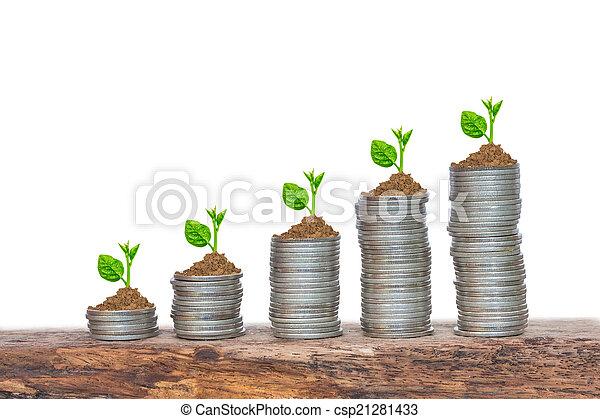 hämorrhoiden, reihenfolge, geldmünzen, bäume, wachsen, keimen - csp21281433