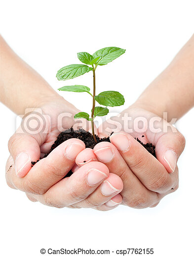 Pflanze in den Händen - csp7762155