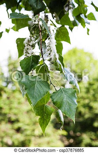träd med hängen