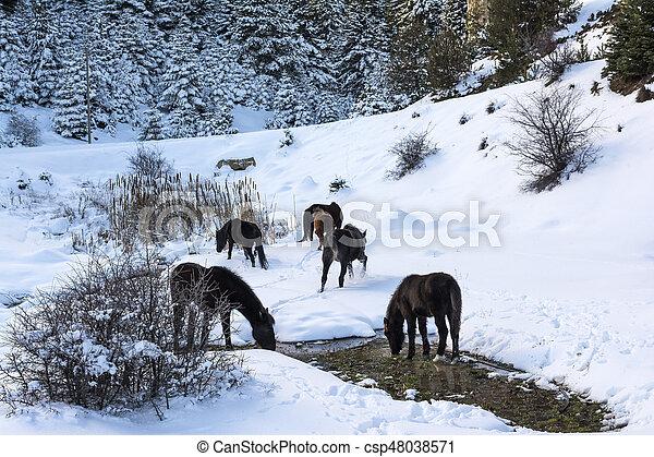 Hästar Gran Vinter Grekland Snö Träd Ziria Peloponnese Svart Gratis Dag Höjande Mountain Syd