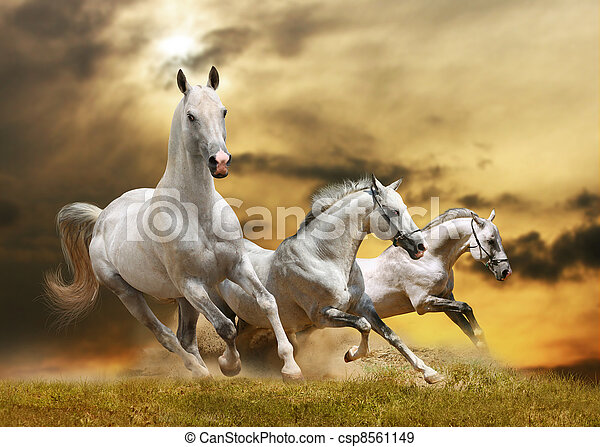 hästar, vit - csp8561149