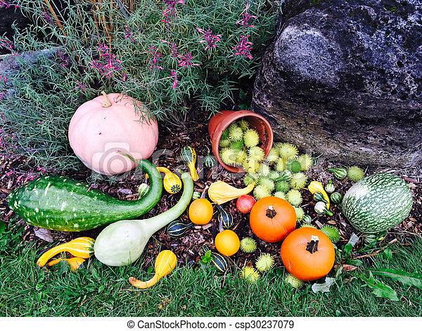 höst, grönsaken, inred, trädgård, färgrik - csp30237079