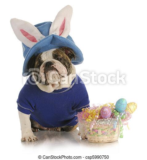 húsvét, kutya - csp5990750