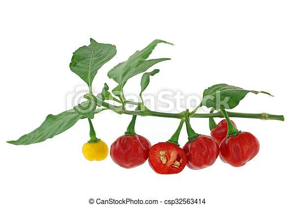 Habanero chili pepper in red yellow - csp32563414