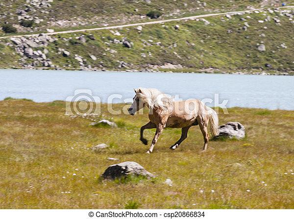 Haflinger Horse in Austria - csp20866834