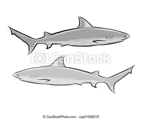 Shark Sketch für Ihr Design - csp21006215