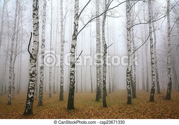 Morgen Nebel im Herbst Birkengang - csp23671330