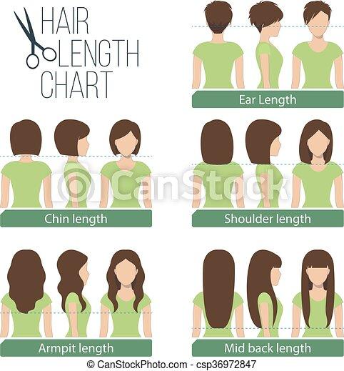 Hair Length Chart Set Of Different Hair Length For