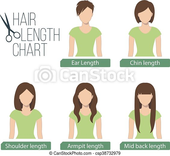Hair Length Chart Front View 5 Different Hair Lengths Vector Canstock