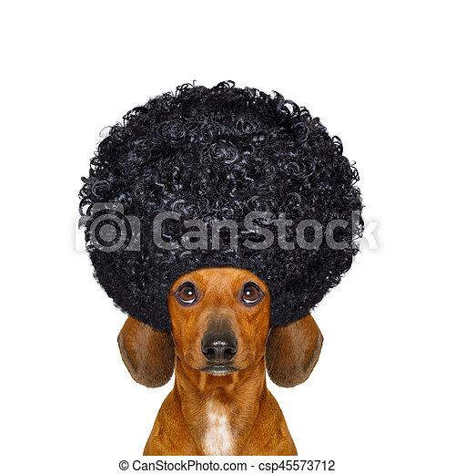 hairdresser groomer dog - csp45573712