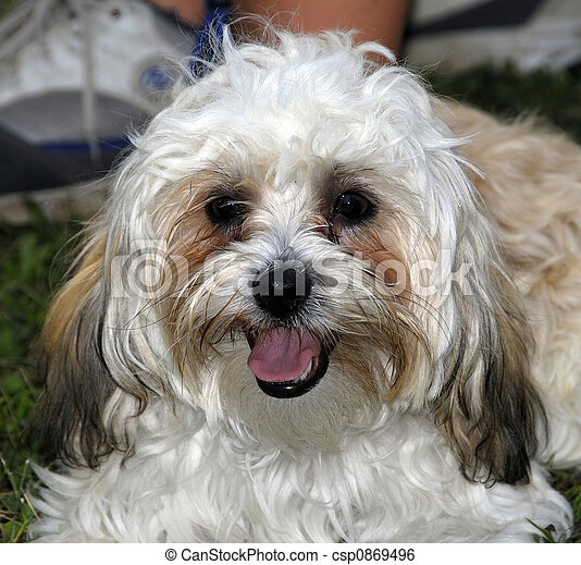 Hairy Dog - csp0869496