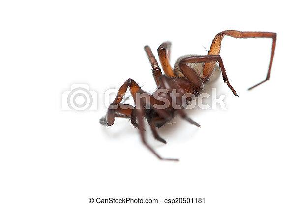 hairy spider - csp20501181