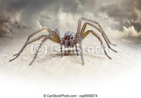 Hairy spider - csp6558374