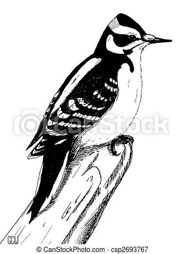 hairy woodpecker male picoides villosus penandink