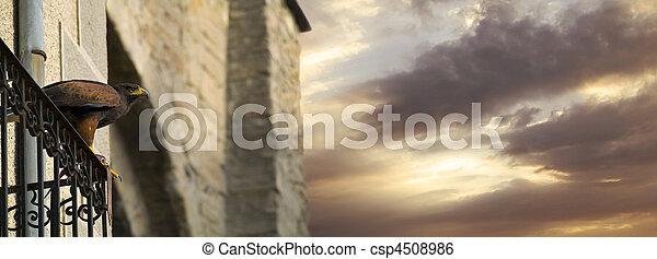 Hawk en el balcón - csp4508986