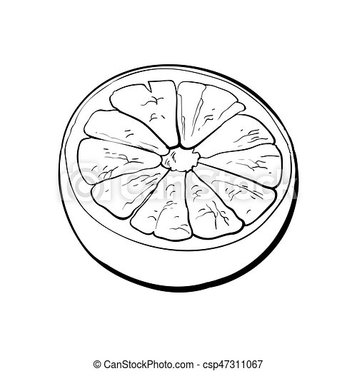 Orange Cut In Half Citrus Isolated On White Background Clipart
