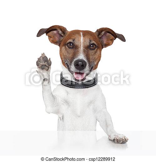 hallo, verabschiedung, hoch fünf, hund - csp12289912