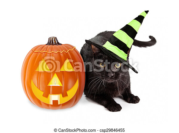 Halloween Black Cat Witch With Pumpkin   Csp29846455