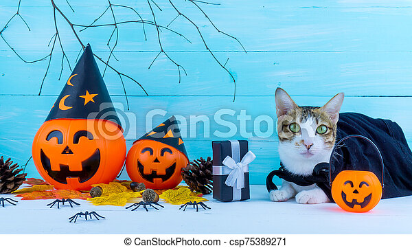 Halloween holiday background with spider, webs, cat and jack lantern on blue wooden table with copy space for text. Flat lay, top view - csp75389271