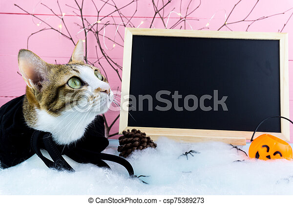 Halloween holiday background with spider, webs, blackboard, cat and jack lantern on pink wooden table with copy space for text. Flat lay, top view - csp75389273