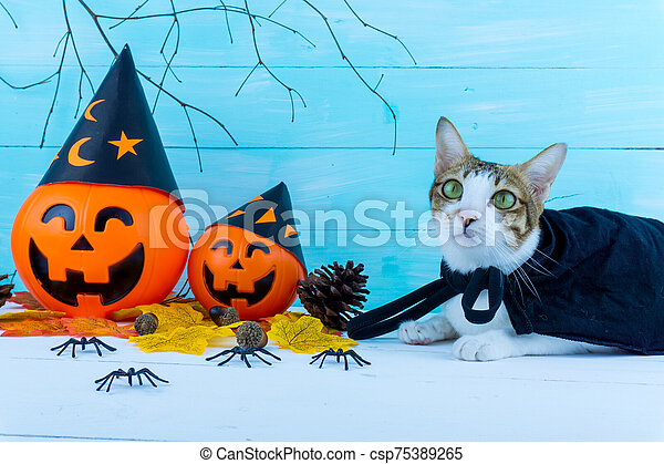 Halloween holiday background with spider, webs, cat and jack lantern on blue wooden table with copy space for text. Flat lay, top view - csp75389265