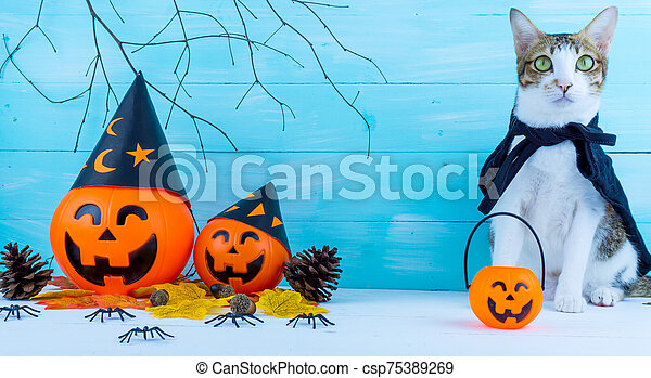 Halloween holiday background with spider, webs, cat and jack lantern on blue wooden table with copy space for text. Flat lay, top view - csp75389269