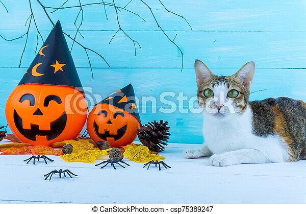 Halloween holiday background with spider, webs, cat and jack lantern on blue wooden table with copy space for text. Flat lay, top view - csp75389247