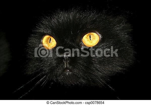 Halloween Kitty 2 - csp0078654