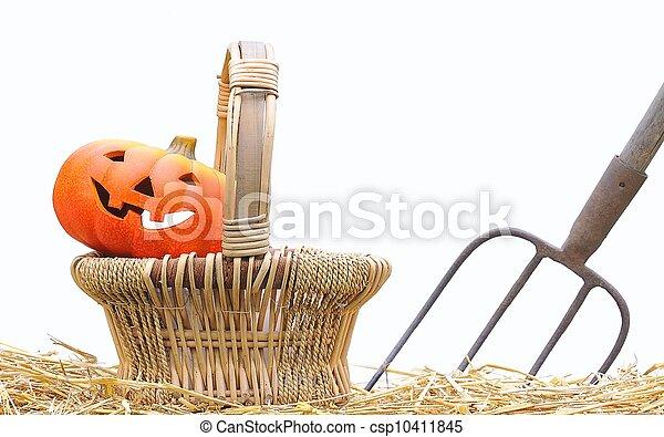 Halloween pumpkins on the farm. - csp10411845