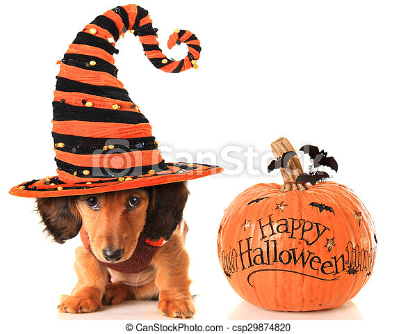 Halloween puppy and pumpkin - csp29874820