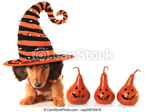 Halloween puppy - csp24918416