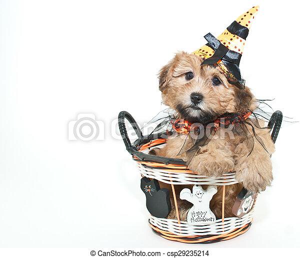Halloween Puppy - csp29235214