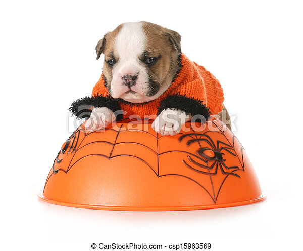 halloween puppy - csp15963569