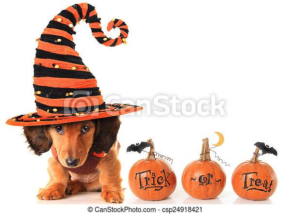 Halloween puppy - csp24918421
