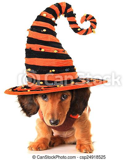 Halloween puppy - csp24918525