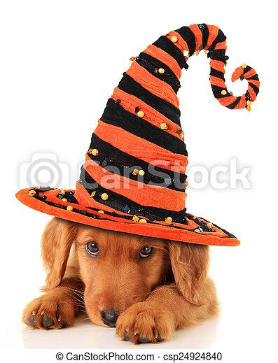 Halloween puppy - csp24924840