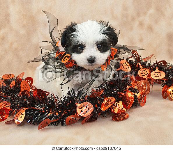Halloween Puppy - csp29187045