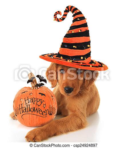 Halloween puppy - csp24924897