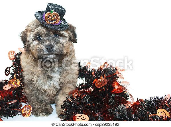 Halloween Puppy - csp29235192