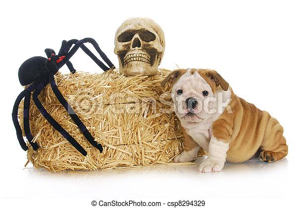 halloween puppy - csp8294329