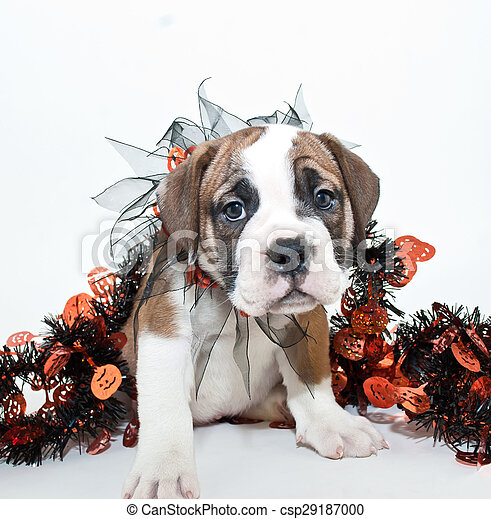 Halloween Puppy - csp29187000