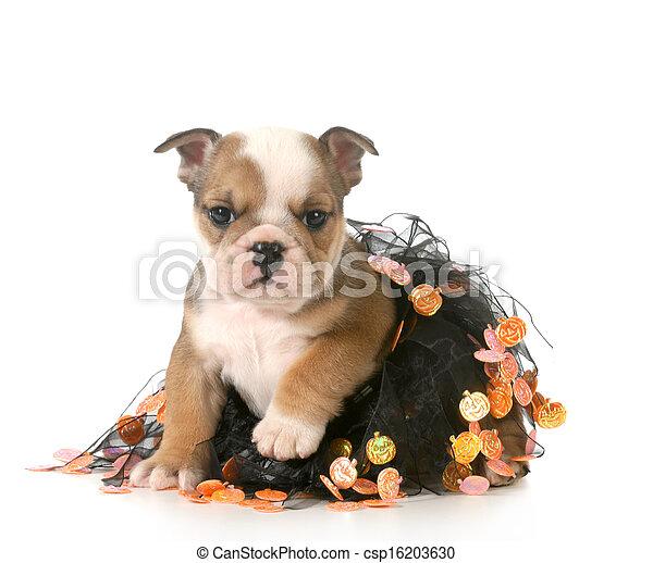 halloween puppy - csp16203630