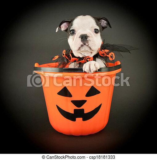 Halloween Puppy - csp18181333